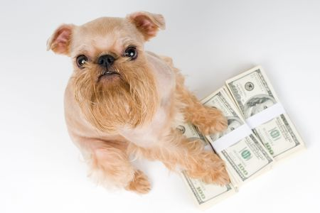 At feet of a dog a heap of money, Protection of the finance