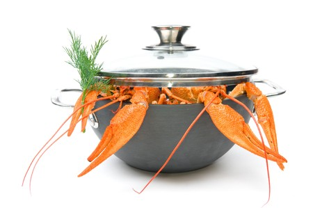 Closeup of isolated crayfish in pan on white background photo