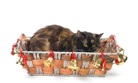 Domestic cat sitting in a Christmas basket Stock Photo - 8135547