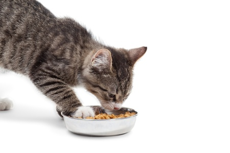 and cat food: The striped kitten eats a dry feed, is isolated on a white background Stock Photo