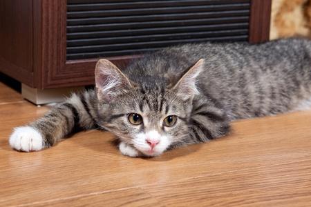 The sleepy kitten lies on wooden to a floor photo