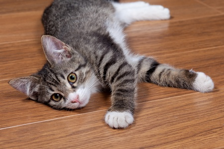 The sleepy kitten lies on wooden to a floor Stock Photo - 10325274
