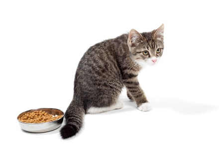 The striped kitten eats a dry feed, is isolated on a white background Stock Photo - 10325266