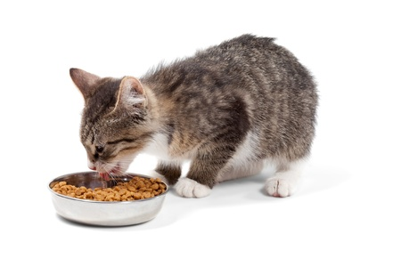 The striped kitten eats a dry feed, is isolated on a white background photo