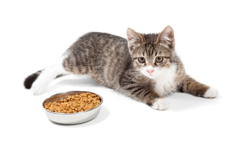 The striped kitten eats a dry feed, is isolated on a white background Stock Photo - 10360761