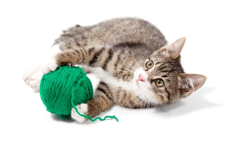 Kitten plays threads, isolated on white background photo