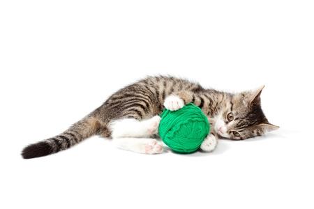 cat toy: Gatito juega hilos, aislados en fondo blanco