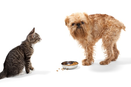 Kitten and puppy share food, isolated on white background photo