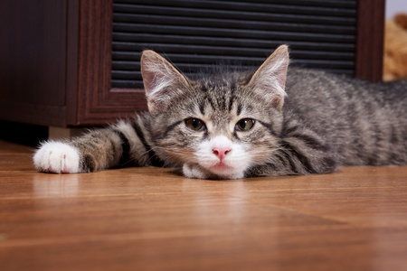 The sleepy kitten lies on wooden to a floor