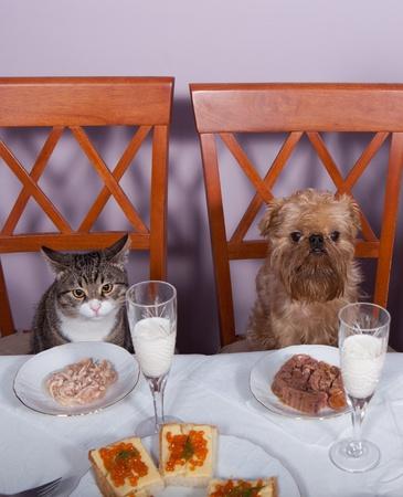 perro comiendo: El gato y un perro para recibir el A�o Nuevo