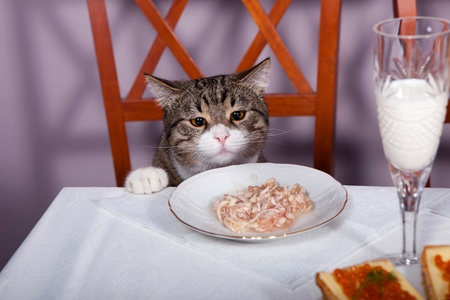 Sad kitten is sitting at a table with a glass of milk photo