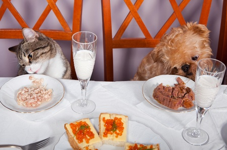 Cat and a dog sitting at a table in the banquet photo