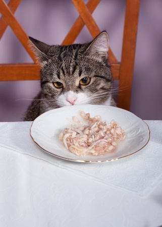 Sad kitten is sitting at a table in the restaurant photo