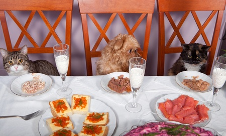 Cats and a dog sitting at a table in the banquet Stock Photo