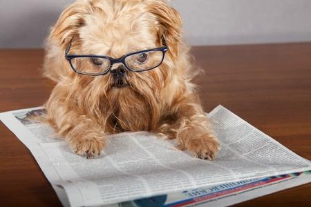 perros graciosos: Perro grave en gafas para leer el peri�dico