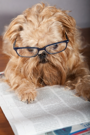 Serious dog in glasses reading the newspaper Stock Photo