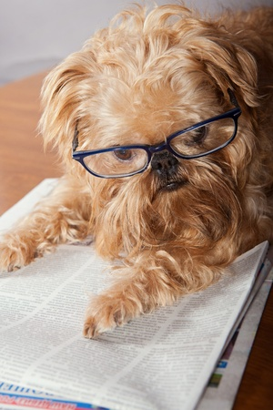 Serious dog in glasses reading the newspaper Stock Photo - 13036012