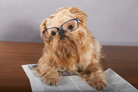 Serious dog in glasses reading the newspaper photo