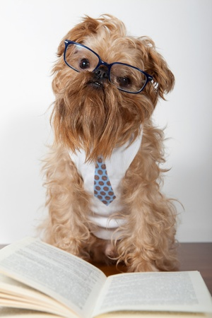Serious dog in the glasses is on the books photo