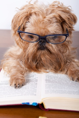 Serious dog in the glasses read a book