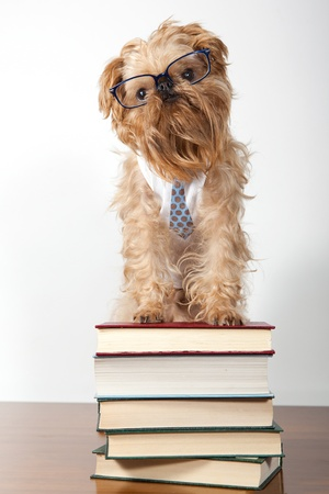 Seus dog in the glasses is on the books Stock Photo - 13141796