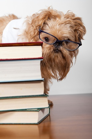 Dog in glasses hidden behind a heap of books photo
