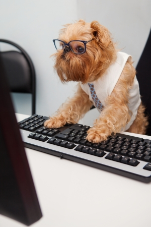 working animal: Dog Manager works for a computer, looking at the monitor