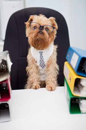 Dog in glasses sitting in an office chair, on with box folder with documents photo