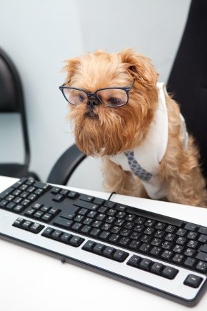 Dog Manager works for a computer, looking at the monitor