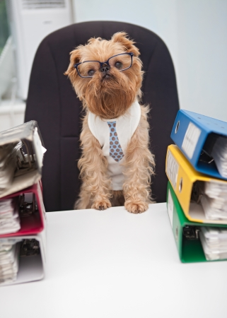Dog in glasses sitting in an office chair, on with box folder with documents Stock Photo