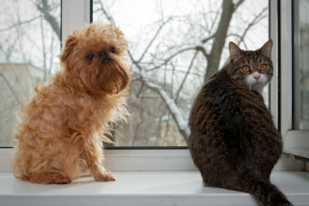 Striped, gray cat and dog  sitting on the window Stock Photo - 18293534