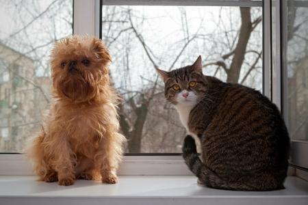 gato gris: Gato a rayas, gris y un perro sentado en la ventana Foto de archivo