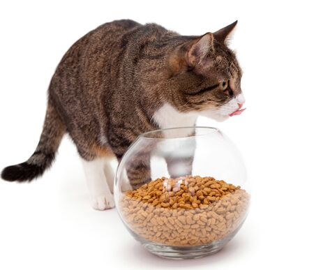 Striped, gray cat and a heap of dry food Stock Photo - 18293529