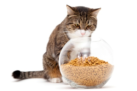 Striped, gray cat and a heap of dry food Stock Photo - 18293530