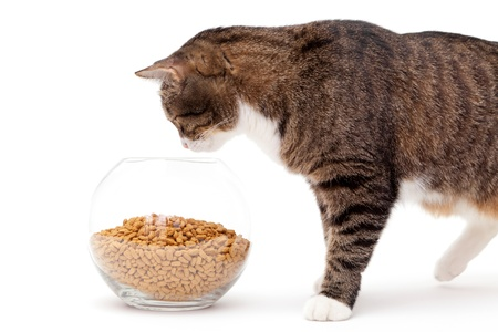 Striped, gray cat and a heap of dry food, isolated on white Stock Photo - 18385727