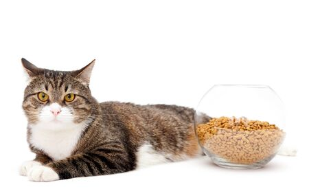 covet: Striped, gray cat and a heap of dry food, isolated on white