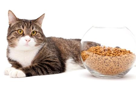 gato gris: Gato a rayas, gris y un mont�n de comida seca, aislado en blanco