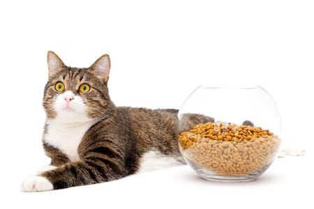 Striped, gray cat and a heap of dry food, isolated on white Stock Photo - 18385726