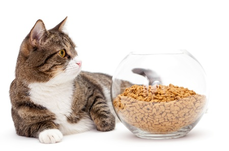 Striped, gray cat and a heap of dry food, isolated on white photo
