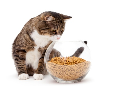 Striped, gray cat and a heap of dry food, isolated on white Stock Photo - 18552420