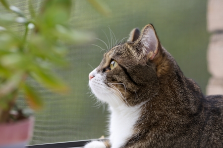 Striped, gray cat with yellow eyes sitting on the window Stock Photo - 21771862