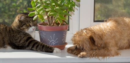 Cat and dog on the window bask in the sunshine photo
