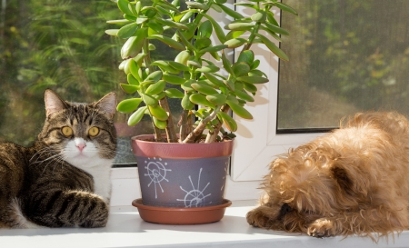 Cat and dog on the window bask in the sunshine Stock Photo - 21771906