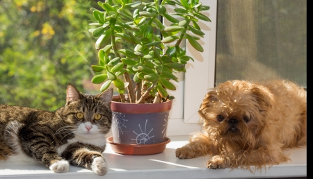 Cat and dog on the window bask in the sunshine Stock Photo