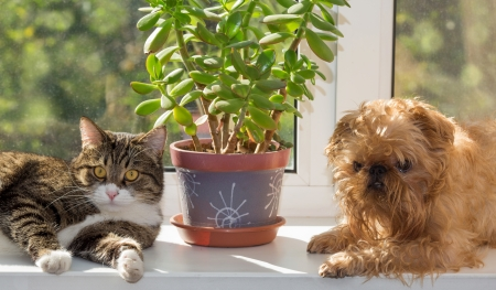 bask: Cat and dog on the window bask in the sunshine Stock Photo