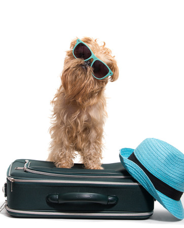 Dog ready for vacation, isolated on white background photo