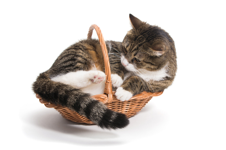 Cat grew up and he needed a big house (basket)
