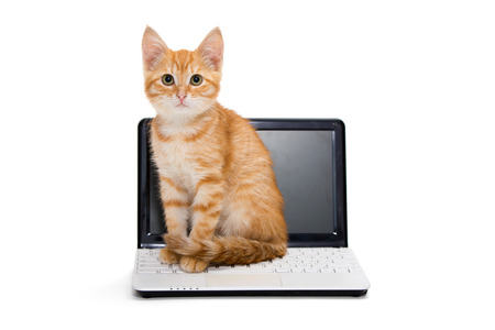 Red striped kitten stretches standing on the laptop photo