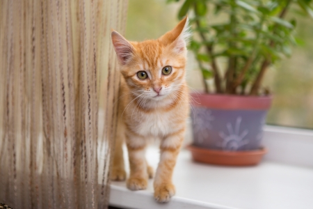 Little  orange kitten stands on the windowsill photo