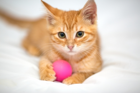 Orange kitten with a ball on a white background photo